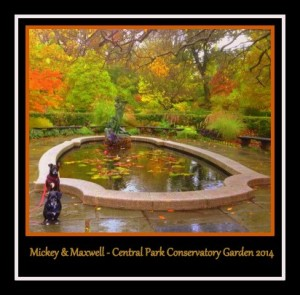 mickey and max at the garden fall foliage